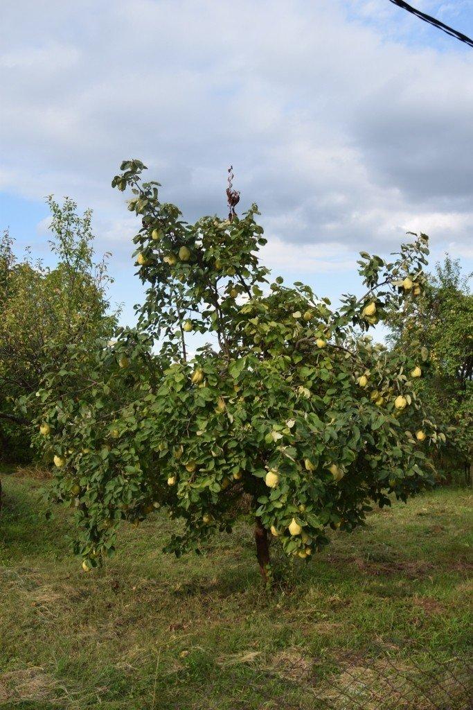 С фруктовыми деревьями здесь полный порядок